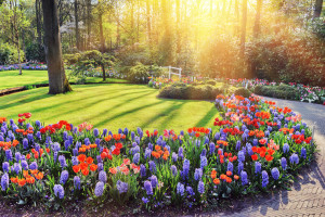 Landscape Insurance